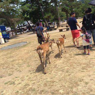紫外線対策 奈良公園